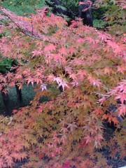 古郡ひろみ 公式ブログ/紅葉と共に 画像3
