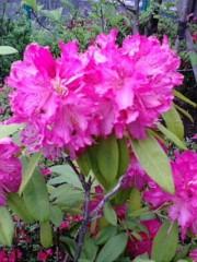 古郡ひろみ 公式ブログ/夏の匂い 画像1