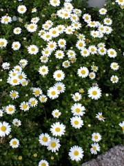 古郡ひろみ 公式ブログ/初夏の陽気 画像1
