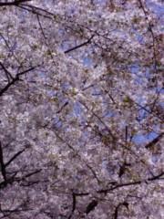 古郡ひろみ 公式ブログ/奇跡の桜 画像1