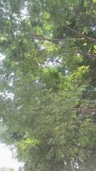 古郡ひろみ 公式ブログ/木陰で… 画像1