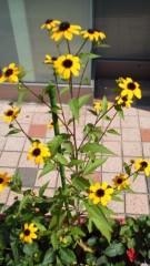 古郡ひろみ 公式ブログ/夏の風物詩 画像1