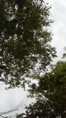 古郡ひろみ 公式ブログ/今日の空 画像2