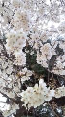 片又咲季 公式ブログ/さくらガール 画像2