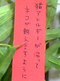 ジャンボ仲根Jr. 公式ブログ/この願い叶って欲しい。 画像1