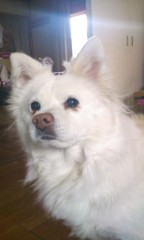 SARY(SALBIA) 公式ブログ/いとこん家 画像2