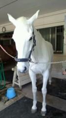 ここあ(プチ☆レディー) 公式ブログ/白のお馬とプチ☆レディー♪女性マジシャンここあ 画像2