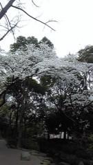ここあ(プチ☆レディー) 公式ブログ/風に負ける!夜桜☆☆ 画像1