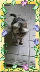 ここあ(プチ☆レディー) 公式ブログ/ネコちゃん♪ 画像2