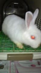 ここあ(プチ☆レディー) 公式ブログ/ウサギ☆年☆ 画像1