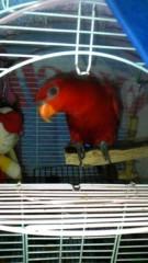 ここあ(プチ☆レディー) 公式ブログ/☆珍☆鳥 画像1