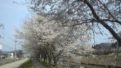 ここあ(プチ☆レディー) 公式ブログ/津波にも地震にも負けず☆気仙沼桜! 画像2