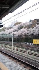 標永久 公式ブログ/桜の木が 画像1