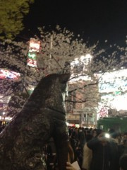 標永久 公式ブログ/名犬ハチ公と桜 画像2