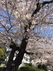 標永久 公式ブログ/桜の森の満開の下で 画像1