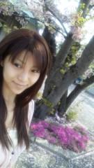 華彩なな 公式ブログ/★桜★ 画像3