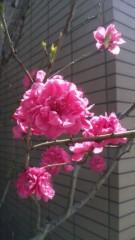 華彩なな 公式ブログ/おはよう( ゜▽゜)/ 画像1