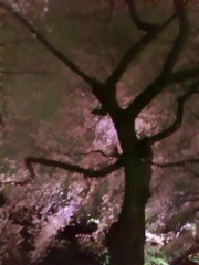 榎本くるみ 公式ブログ/桜 画像1