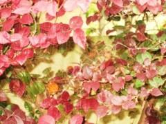榎本くるみ 公式ブログ/小さなファンタジー 画像2