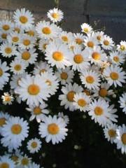 榎本くるみ 公式ブログ/美花 画像1