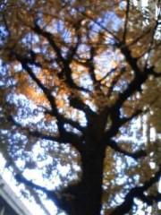 榎本くるみ 公式ブログ/自然の色 画像1