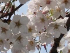 榎本くるみ 公式ブログ/近所を散歩中 画像2