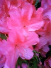 榎本くるみ 公式ブログ/お花 画像1