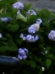 榎本くるみ 公式ブログ/紫陽花 画像1