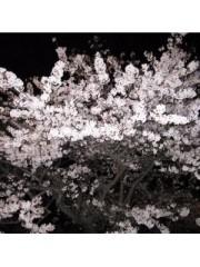 榎本くるみ 公式ブログ/夜桜 画像2