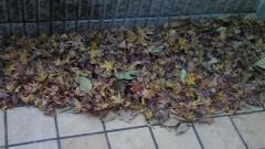 イリア 公式ブログ/落ち葉掃き 画像1
