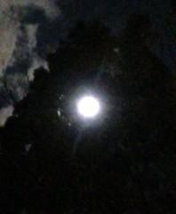 寺田敏子 公式ブログ/昨日の満月 画像1