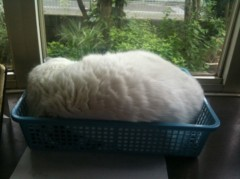 柏谷菜々子 公式ブログ/猫◯◯ 画像1