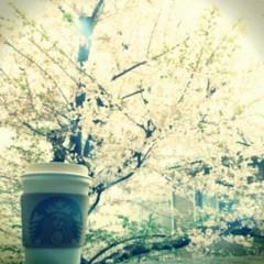 柏谷菜々子 公式ブログ/またまた桜 画像2