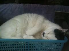 柏谷菜々子 公式ブログ/猫◯◯ 画像2