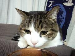 さとうゆみ 公式ブログ/みーくんおでんクイズ 画像2