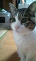 さとうゆみ 公式ブログ/黒猫兄妹 画像2