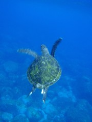 さとうゆみ 公式ブログ/今日も海へ 画像1