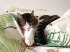さとうゆみ 公式ブログ/みーくん、今日も昼寝日和 画像1