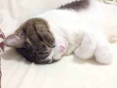 さとうゆみ 公式ブログ/乙女なオトコ 画像1