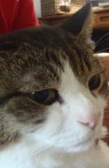 さとうゆみ 公式ブログ/One Action for Animals 画像3