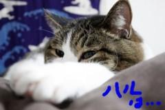 さとうゆみ 公式ブログ/春ネイル 画像2