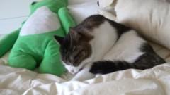さとうゆみ 公式ブログ/みーくん、ネコになる 画像3
