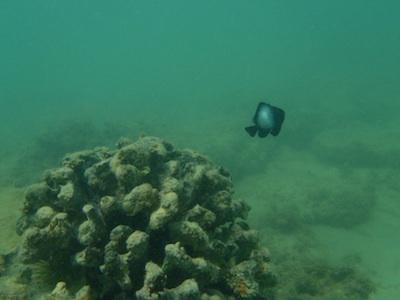 タートルベイの海の中