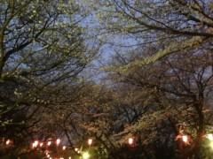 さとうゆみ 公式ブログ/お花見 画像1