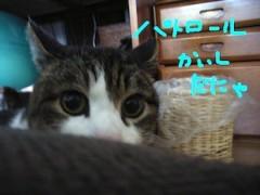 さとうゆみ 公式ブログ/パトロール 画像3