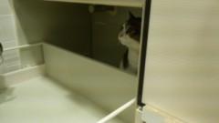 さとうゆみ 公式ブログ/みーくん、ネコになる 画像2