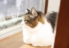 さとうゆみ 公式ブログ/おだやかな朝 画像3