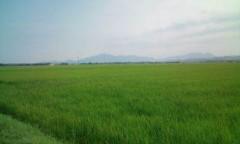 さとうゆみ 公式ブログ/散歩 画像1