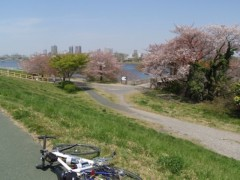 さとうゆみ 公式ブログ/桜の下で 画像1