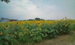 さとうゆみ 公式ブログ/ひまわり畑 画像1